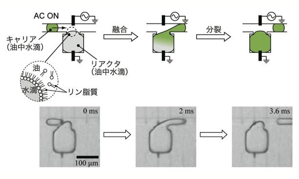 非平衡開放系の反応のモデル