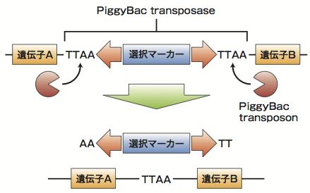図2 PiggyBacの仕組み