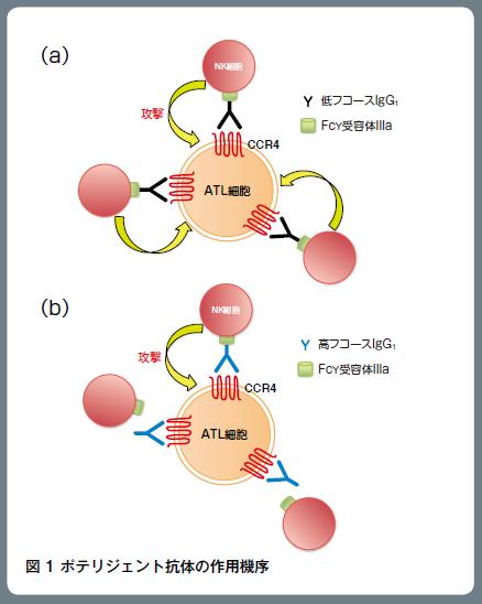 図1 ポテリジェント抗体の作用機序
