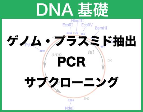DNA 基礎