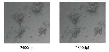 図4 大まかな薬剤感受性薬剤感受性判断を高速で行いたい行いたい場合には2400dpi(分解能:約10μm)で、さらに更に正確な形状観察が必要な場合には4800dpi(約5μm)、9600dpi(約2.6μm)の解像度が選択選択可能だ