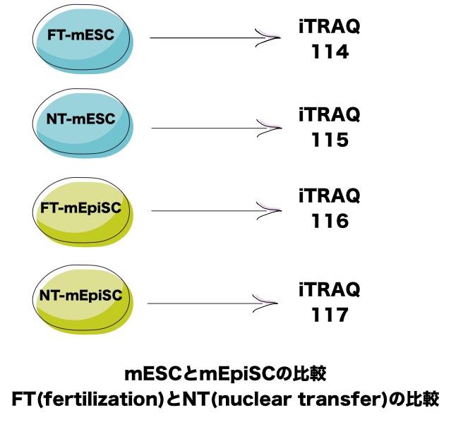 itraq-mESC-mEpiSC