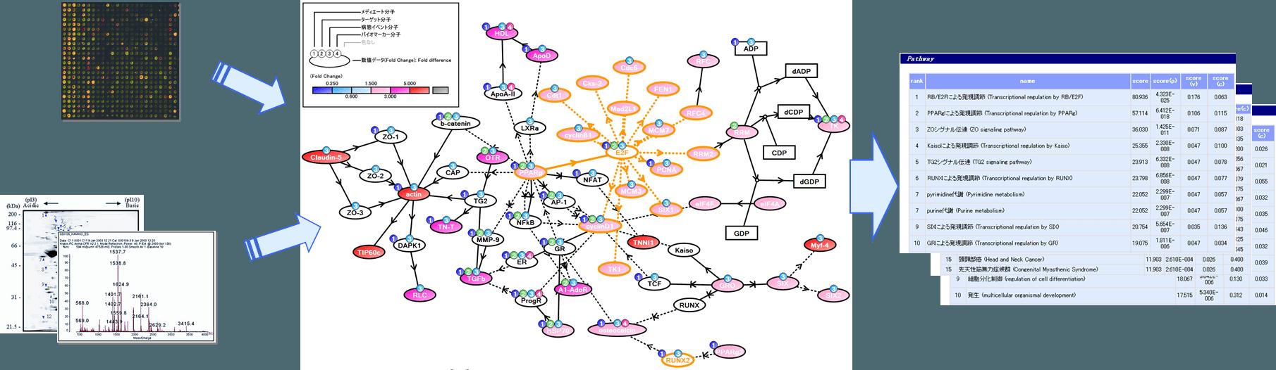Keymolnetによる解析イメージ